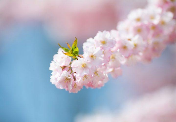 blossom-1189061_1920